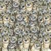 Riesci a trovare il gatto tra i gufi?