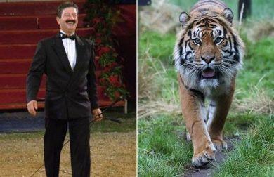 Domatore morto nella gabbia delle tigri: non è stato aggredito