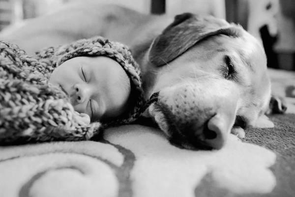 cane e bambino insieme
