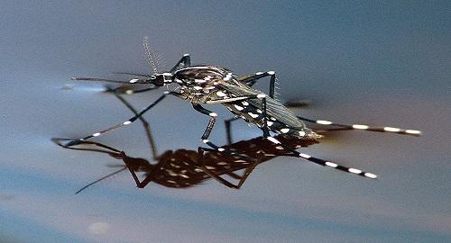 stermina zanzare naturale e ecologico