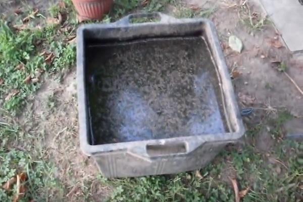 Stermina zanzare naturale ed ecologico fai da te for Costruire ecologico