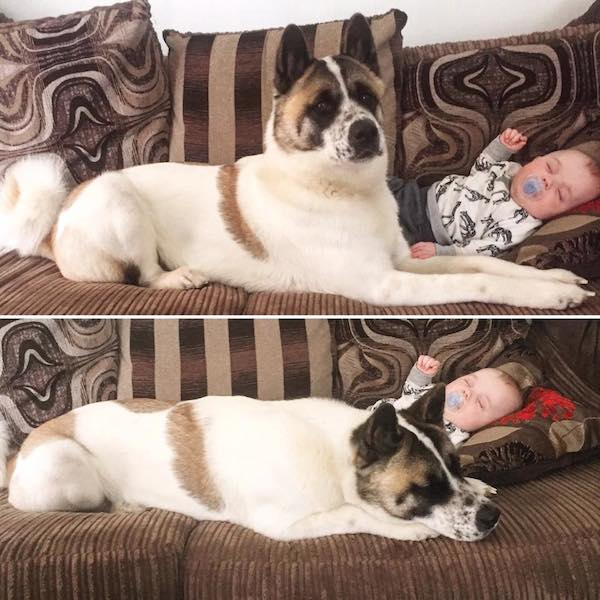 cane ha fiutato la malattia pancia mamma