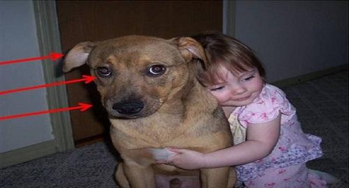 abbracciare il cane pericoloso per il bambino