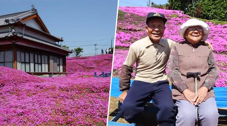 Toshiyuki Kuroki coltiva il terreno intorno alla sua casa fin quando diventa un tappeto di fiori rosa, lo fa per salvare la moglie malata dalla depressione.