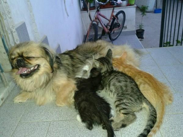cagnolina che allatta gattini orfani storia