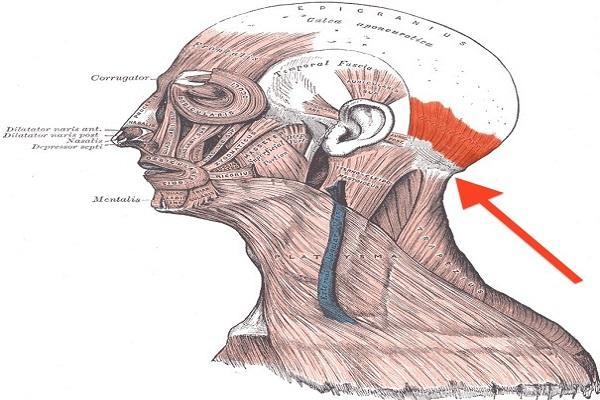 massaggio al collo feng fu