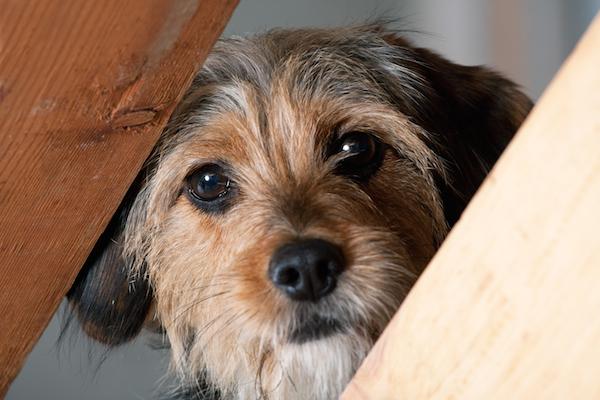 educare il cane a fare i bisogni