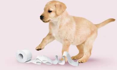 Curiosità sulla carta igienica: 5 cose che non sapevi