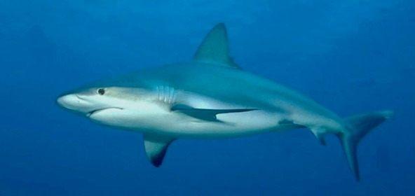Stereogrammi: trova lo squalo e gli altri oggetti nascosti
