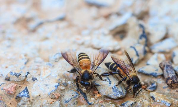 nidi di vespe di terra come riconoscerli, cautele e pericoli