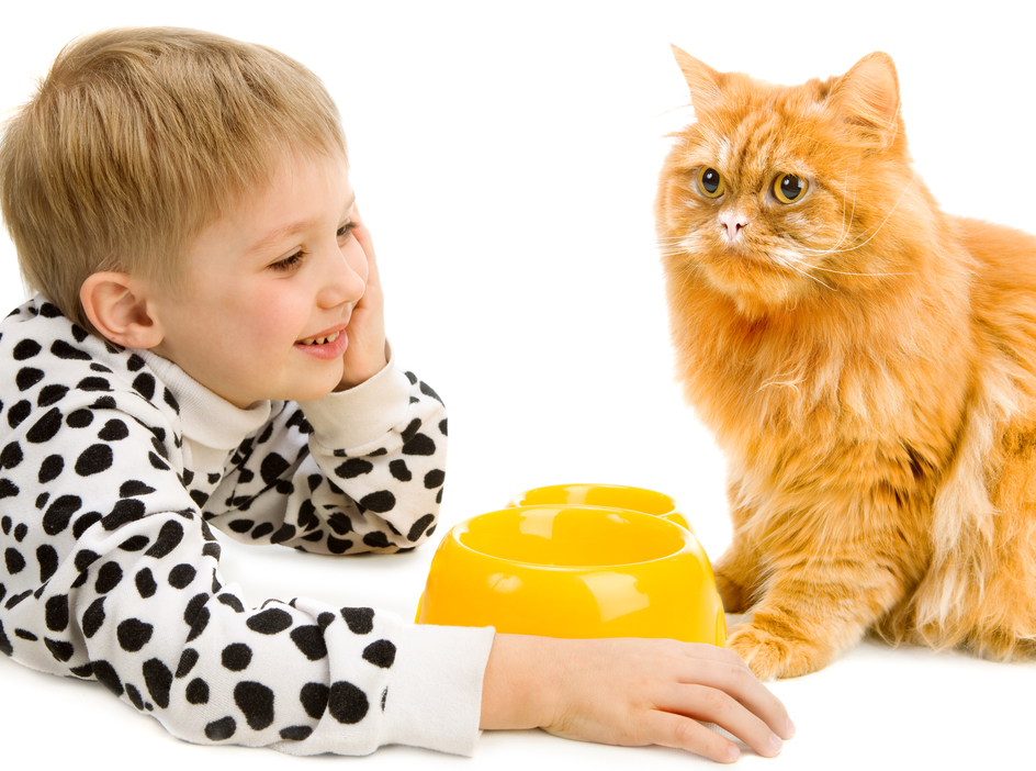 Rapporto gatti e bambini