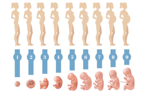 settimane di gravidanza mamma calcolo gestazione