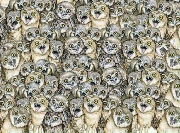 trovare il gatto tra i gufi