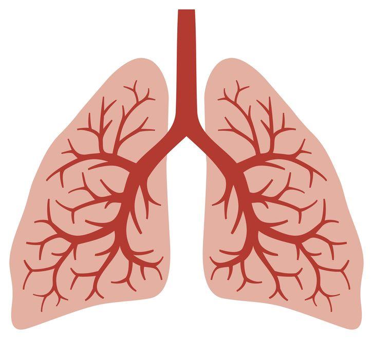 Come si cura la tosse: immaginate le vie respiratorie come un albero alla rovescia.