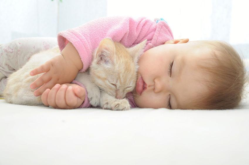 quali malattie trasmette il gatto