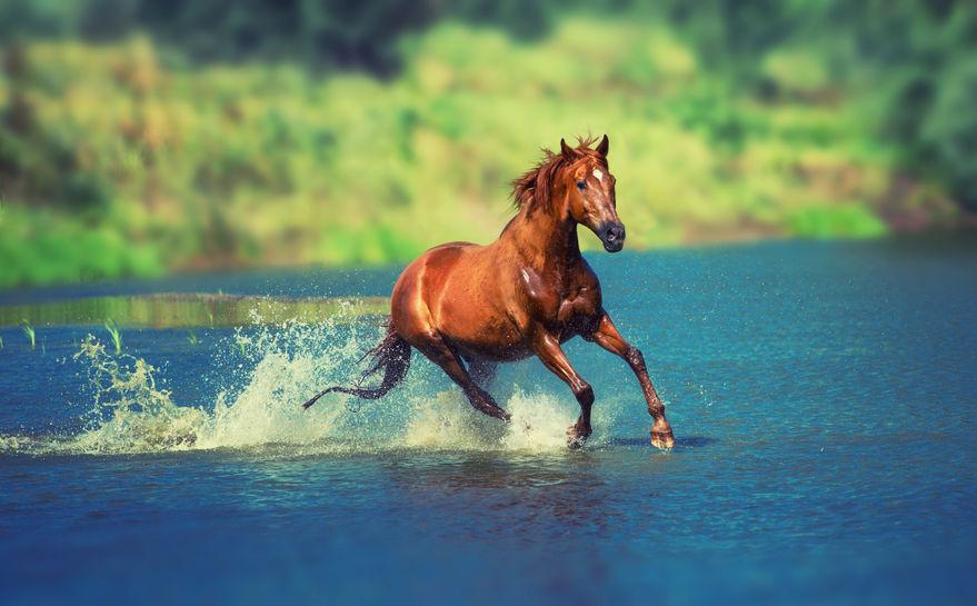Il cavallino, il fiume e il coraggio - Favola della Buonanotte