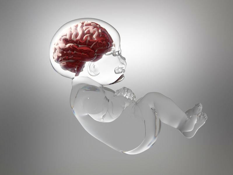 Intelligenza del bambino nella pancia della mamma.