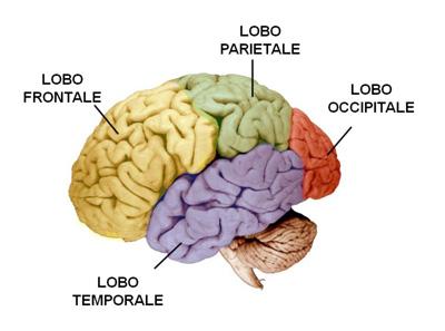 cancro cerebrale