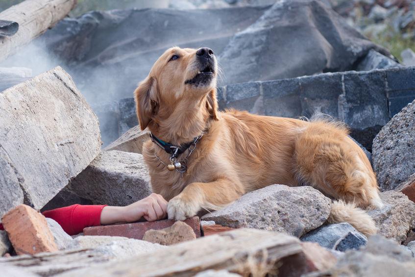 il cane sulle macerie