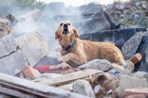 Il cane sulle macerie, fotografo Jaroslav Noska