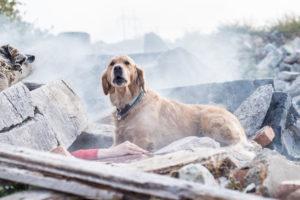 fotografo Jaroslav Noska - Il cane sulle macerie,