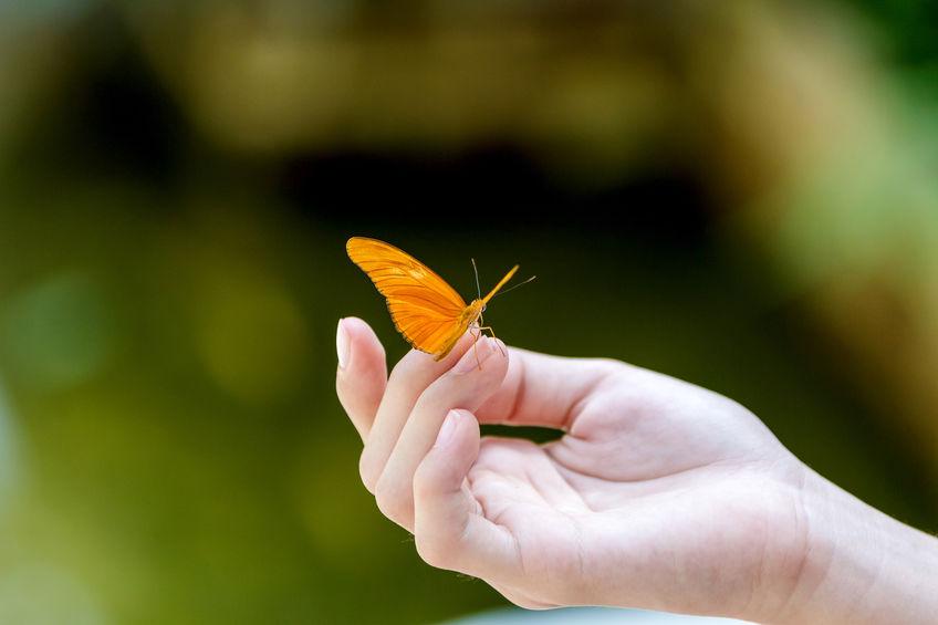 siamo come farfalle
