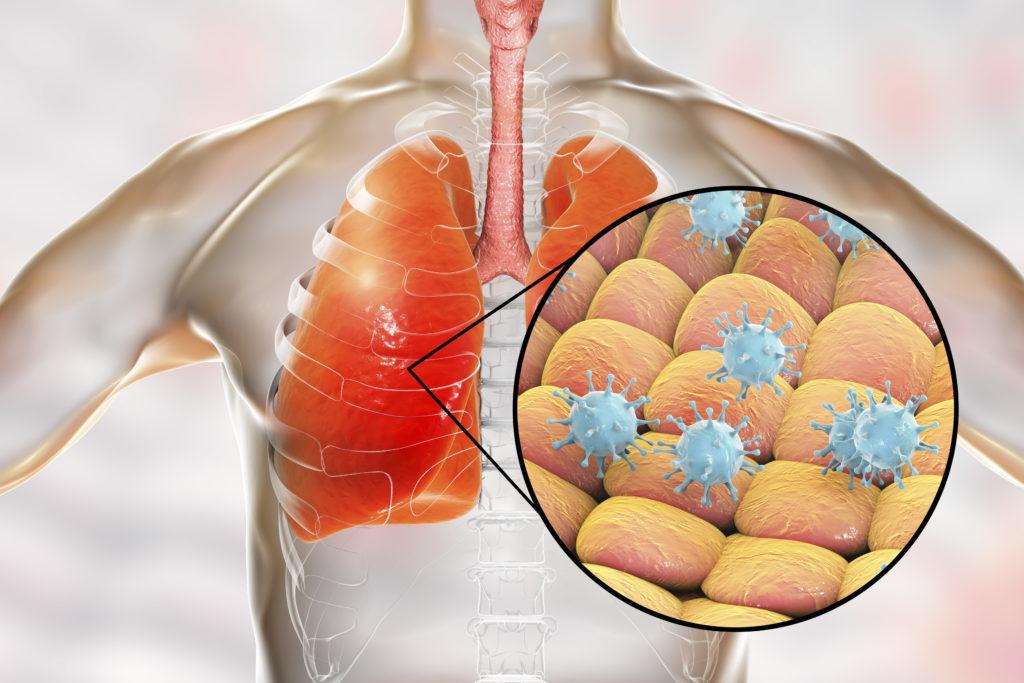 Il Coronavirus potrebbe diventare un virus ubiquitario